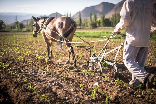 Argentina Travel Landscape Photography Farmer ploughing crops in a field in the Andes Mountains landscape in the Cachi Valley scenery Calchaqui Valleys Salta Province North Argentina South America