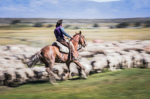 Argentina Travel Landscape Photography Gauchos riding horses to round up sheep El Chalten Patagonia Argentina South America 2