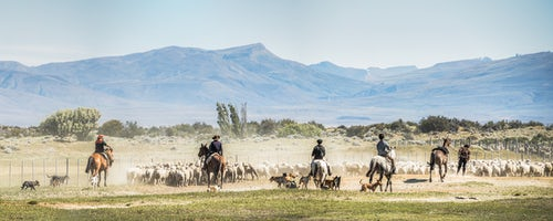 Argentina Travel Landscape Photography Gauchos riding horses to round up sheep El Chalten Patagonia Argentina South America