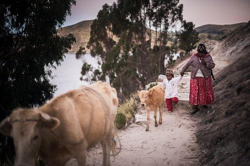 Bolivia Travel Landscape Photography Chollita at Challapampa village Isla del Sol Island of the Sun Lake Titicaca Bolivia South America