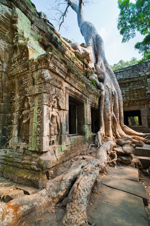 Cambodia Travel Photography Twisted old roots at Ta Prohm Temple Angkor Temple Complex Cambodia Indochina Southeast Asia Asia Southeast Asia