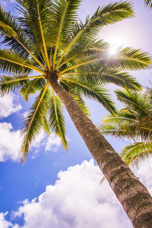 Cook Islands Landscape Travel Photography Palm tree in Titikaveka Rarotonga Cook Islands South Pacific Ocean
