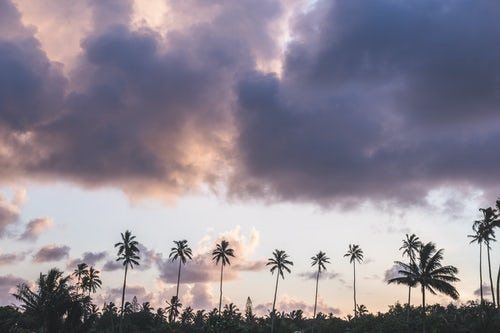 Cook Islands Landscape Travel Photography Tropical palm trees and dramatic sunset sky on the tropical island of Rarotonga Cook Islands background with copy space
