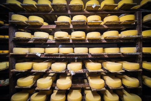 Ecuador Travel Photography Cheese maturing in the cheese factory on the farm at Hacienda Zuleta Imbabura Ecuador South America