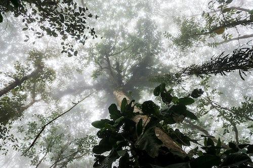Ecuador Travel Photography Misty Jungle Mashpi Cloud Forest in the Choco Rainforest Ecuador South America