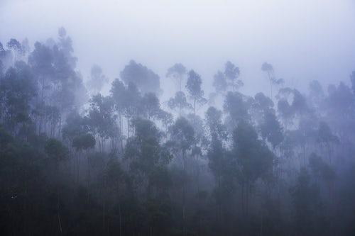Ecuador Travel Photography Misty forest landscape Hacienda Zuleta Imbabura Ecuador South America