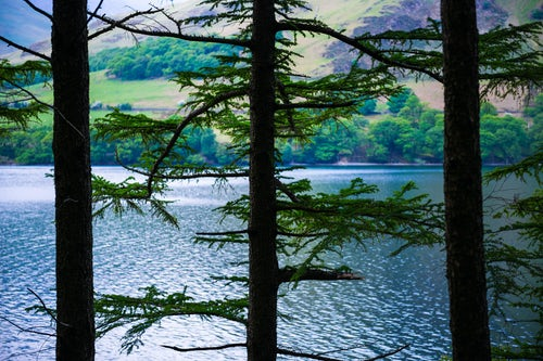 England Landscape Photography Photographer Mysterious forest landscape at Buttermere Lake Lake District scenery Cumbria England UK Europe