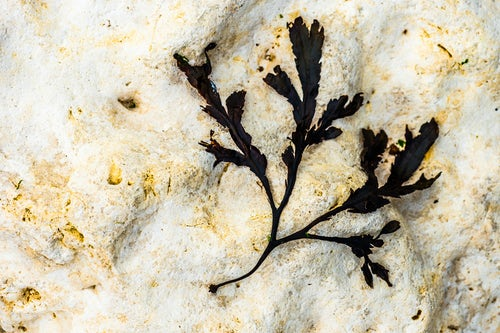 England Landscape Photography Photographer Seaweed detail Cuckmere Haven Beach Sussex England