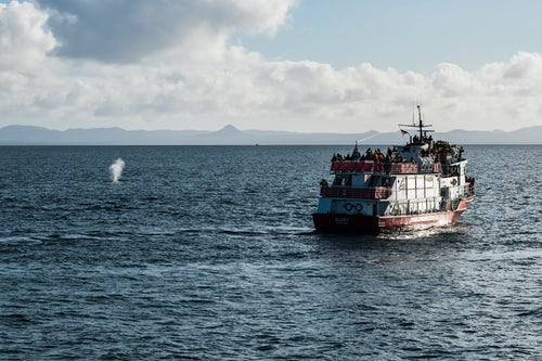 Iceland Wildlife Photography Spout from a whale and a whale watching boat Reykjavik Iceland Europe