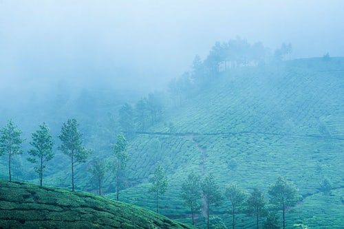 India Landscape Photography Tea plantations in the misty India landscape Munnar Western Ghats Mountains Kerala 2