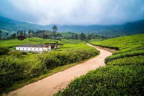 India Landscape Photography Tea plantations landscape near Munnar in the Western Ghats Mountains Kerala India