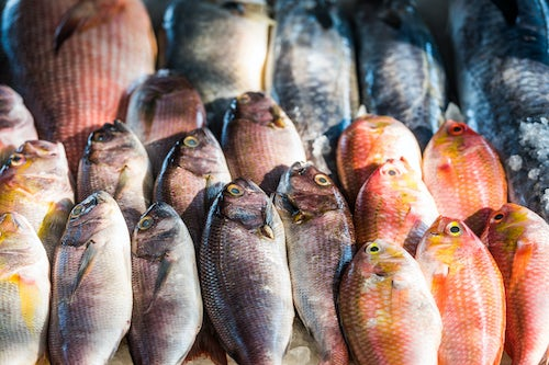 India Travel Photography Fish for sale at a food market in Fort Kochi Cochin Kerala India