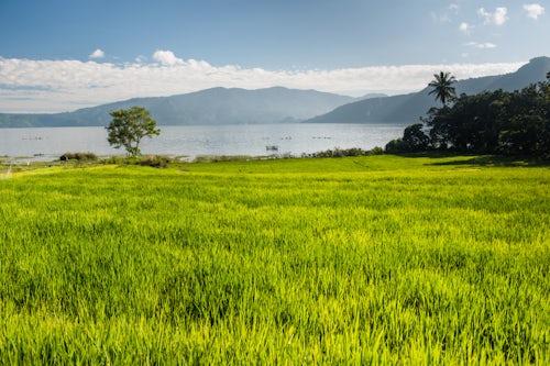 Indonesia Travel Photography Rice paddy fields at Lake Toba Danau Toba North Sumatra Indonesia Asia