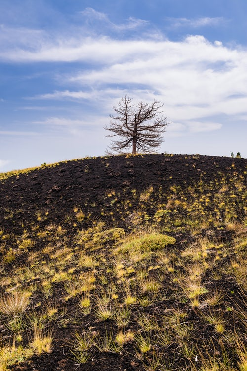 Italy Sicily Travel Photography Mount Etna Volcano dead tree on an old lava flow from an eruption Sicily UNESCO World Heritage Site Italy Europe