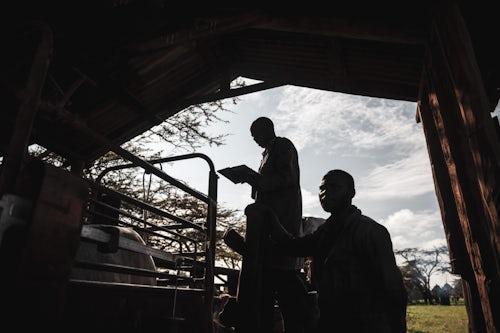 Kenya Documentary Travel Photography Cattle farming at Mogwooni Ranch Laikipia County Kenya