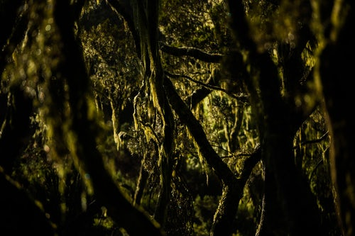 Kenya Landscape Photography Giant Heather Forest in Aberdare National Park Kenya 2