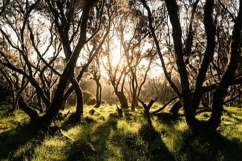 Kenya Landscape Photography Giant Heather Forest in Aberdare National Park Kenya