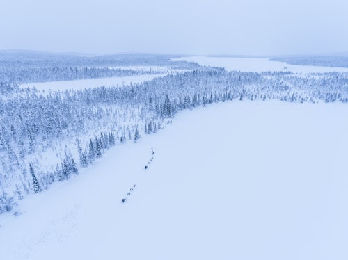 Lapland Finland Adventure Travel Photography Husky dog sledding on a frozen icy snow covered lake in winter in the Lapland landscape in a forest in Finland drone