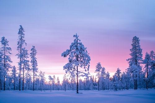 Lapland Finland Landscape Photography Snow covered winter landscape at sunrise Lapland Pallas Yllästunturi National Park Finland