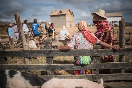 Madagascar Documentary Travel Photography Andohasana Monday Pig Market Madagascar Central Highlands 2