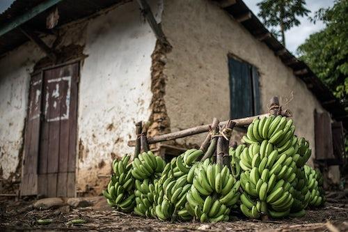Madagascar Travel Photography Bananas for sale in Ranomafana Town Madagascar Central Highlands