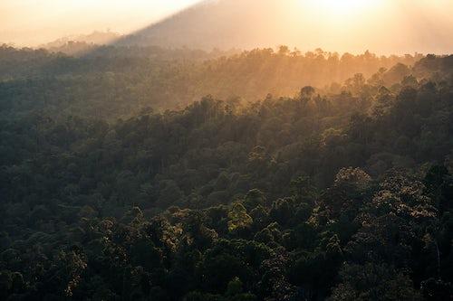 Malaysia Landscape Photography Rainforest at sunrise seen from Bukit Tabur Mountain Kuala Lumpur Malaysia Southeast Asia