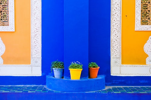 Morocco Travel Photography Colourful potted plants Majorelle Gardens aka Gardens of Yves Saint Laurent Marrakech Marrakesh Morocco North Africa Africa