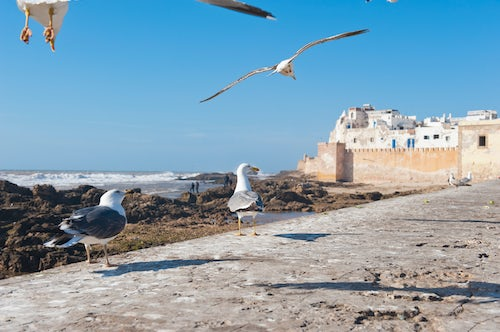 Morocco Travel Photography Seagulls on the sea front at Essaouira formerly Mogador Morocco North Africa Africa