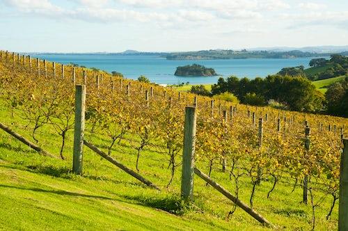 New Zealand Landscape Photography Autumn vineyard on Waiheke Island Auckland North Island New Zealand