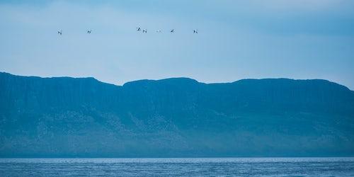 Northern Ireland UK Wildlife Photography Birds on Rathlin Island County Antrim Northern Ireland