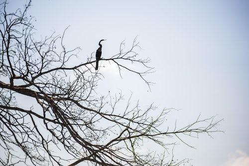 Peru Wildlife Photography Bird sihouetted at Sandoval Lake Tambopata National Reserve Amazon Jungle of Peru South America