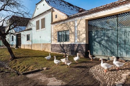 Romania Travel Photography Colourful houses in Viscri UNESCO World Heritage Site Transylvania Romania