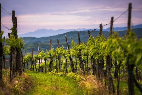 Slovenia Landscape Photography Vineyards and mountains near Smartno in the Goriska Brda win region of Slovenia Europe