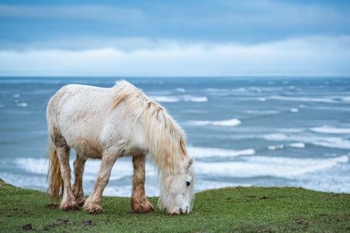 Wales Wildlife Photography