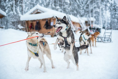 Commercial Travel Photographer London Lapland Advertising Photography 007 of 033