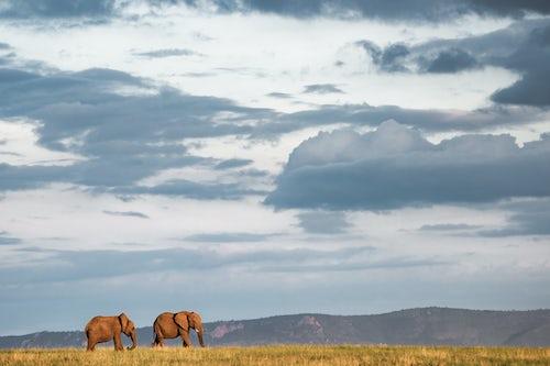 Kenya African Wildlife Photographer 009 of 053