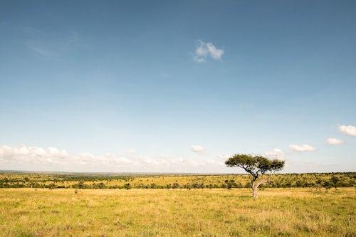 Kenya African Wildlife Photographer 017 of 053