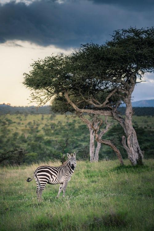Kenya African Wildlife Photographer 028 of 053