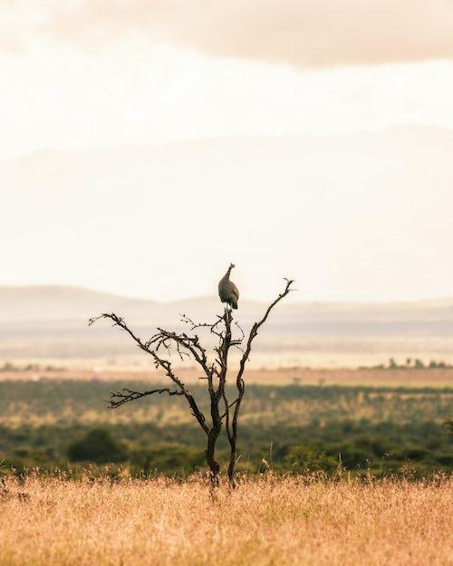 Kenya African Wildlife Photographer 036 of 053