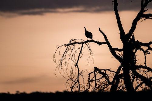 Kenya African Wildlife Photographer 039 of 053