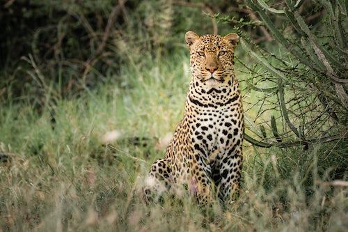 Kenya African Wildlife Photographer 041 of 053