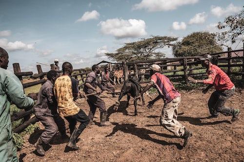 Documentary Travel Photography by UK London Documentary Travel Photographer Kenya Mogwooni Ranch 3