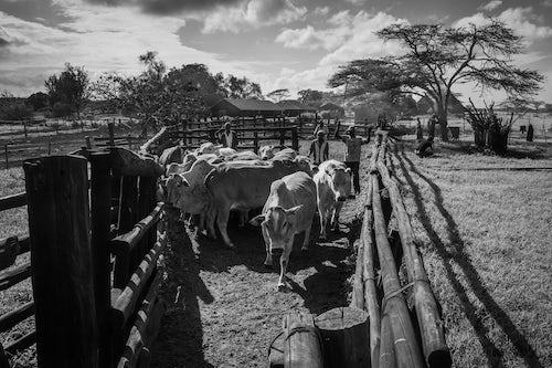 Documentary Travel Photography by UK London Documentary Travel Photographer Kenya Mogwooni Ranch