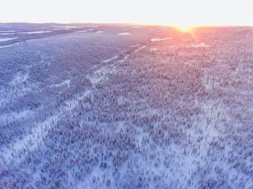 Drone Photography by UK London Freelance Drone Photographer Aerial photo of a snow covered winter forest full of trees at sunset in the Arctic Circle in Finnish Lapland Finland drone