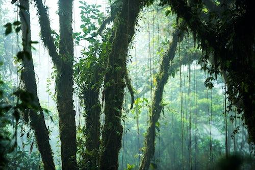 Landscape Photography by Professional Freelance UK Landscape Photographer Misty Monteverde Cloud Forest Reserve Puntarenas Costa Rica Central America