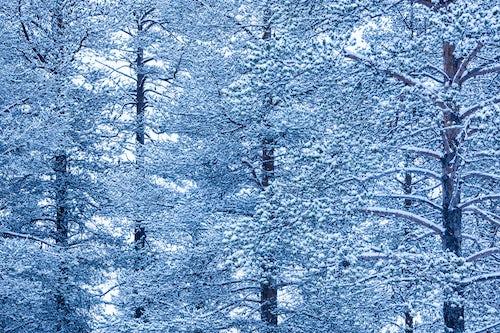 Landscape Photography by Professional Freelance UK Landscape Photographer Winter forrest landscape Akaslompolo Lapland Finland